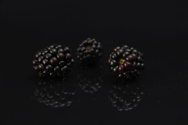 Moras negras, un botánico singular para una ginebra única